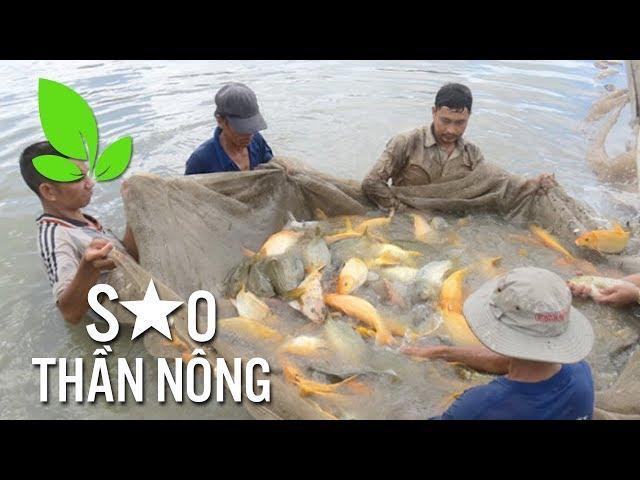 Thu nhập hàng tỷ đồng mỗi năm nhờ nuôi cá chép giòn