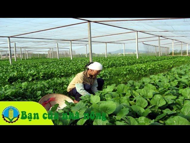 Kỹ thuật, kinh nghiệm xây dựng nhà lưới trong trồng trọt