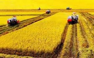 Kiến thức Nông nghiệp